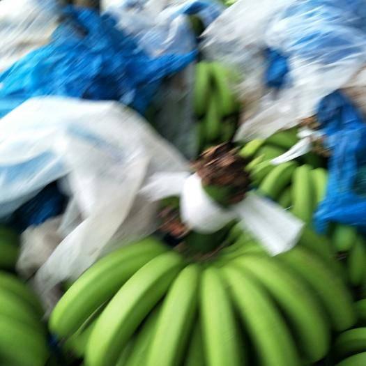 湛江 香蕉大掉价需要的赶紧联系