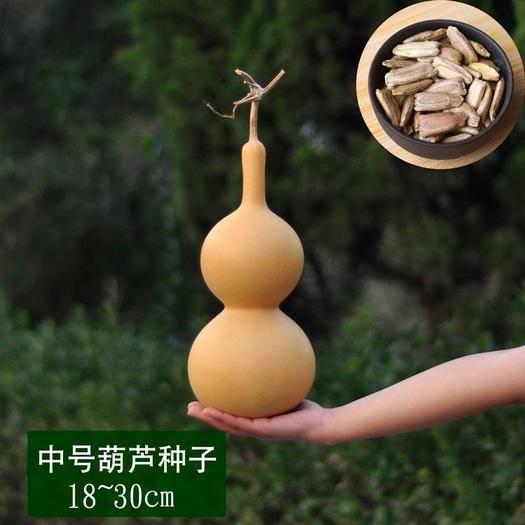 聊城 葫芦之乡 山东东昌府正宗葫芦种子 附赠种子技术说明书