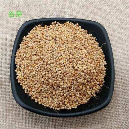 保定安國市谷芽 產地貨源 平價直銷 無硫 代打粉 袋裝
