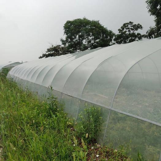 唐山 西瓜大棚膜、草莓大棚膜、葡萄专用膜。防水滴防雾气终身。无滴膜