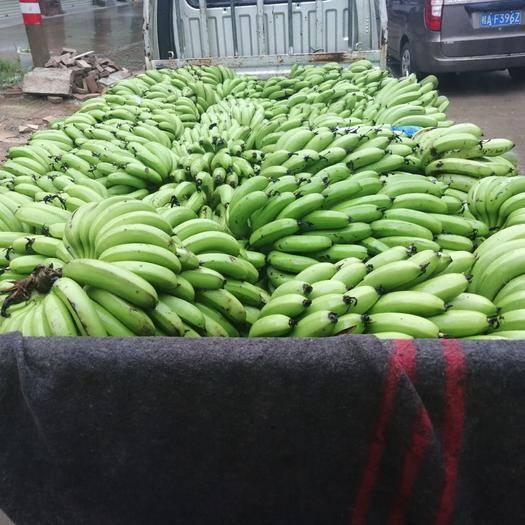南宁西乡塘区 普通香蕉大香蕉