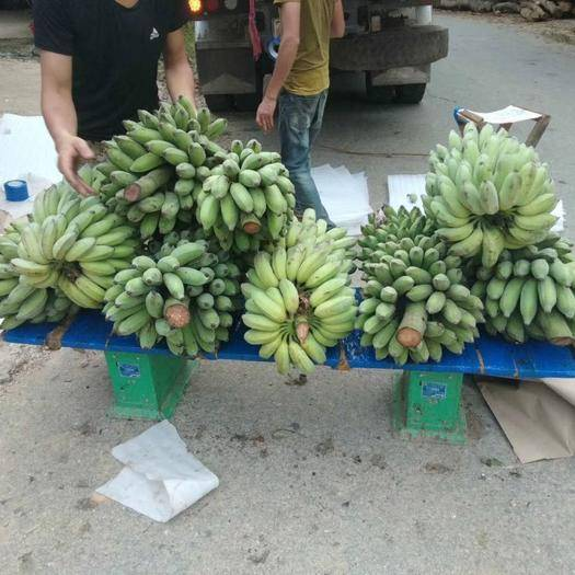 文山砚山县河口香蕉 越南西贡蕉