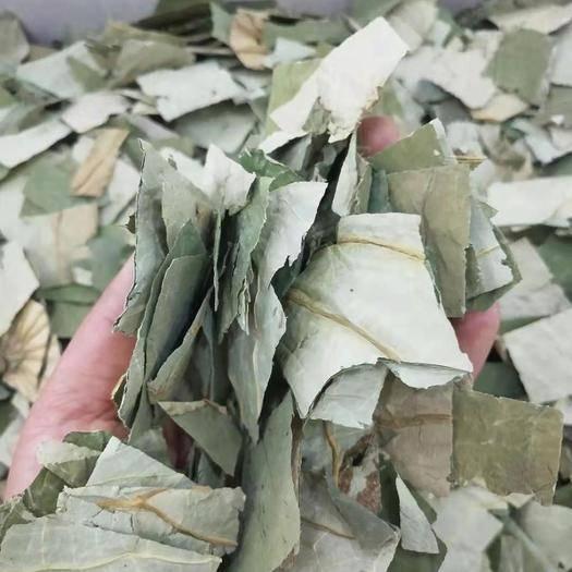 安國市 荷葉茶 無硫 產地直銷 批發 零售 一斤包郵