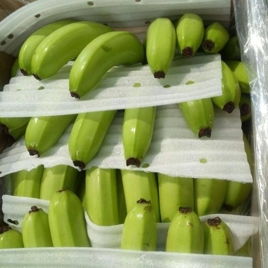 湛江 香蕉