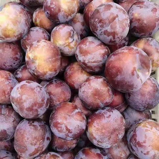 西安周至县 酸甜可口的水果一黑巨李子