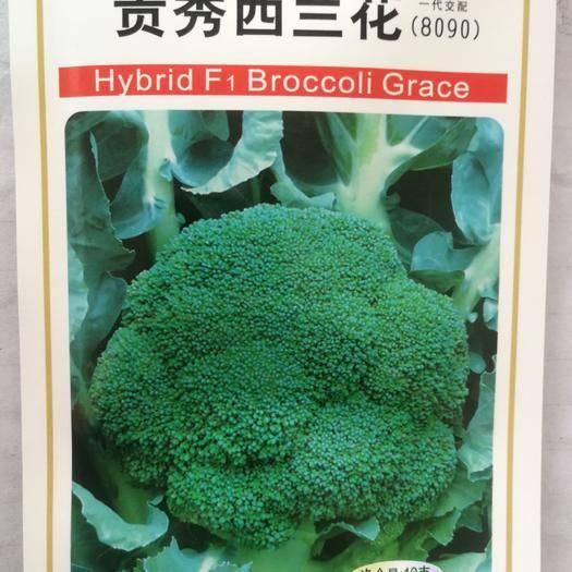 绵阳涪城区 日本进口细花西兰花种子