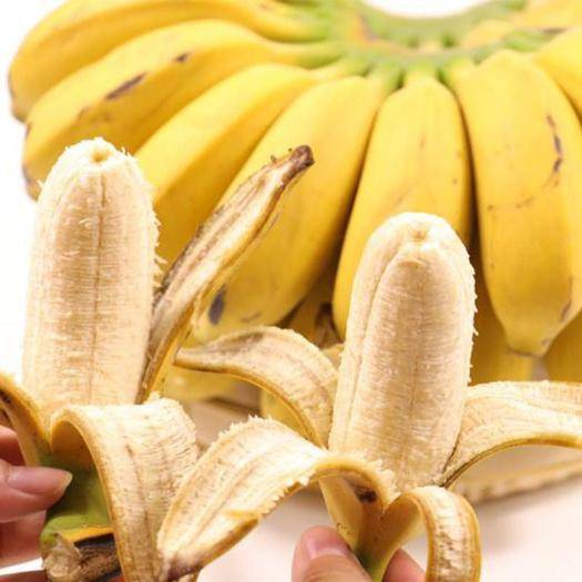 南宁 广西小米蕉9斤净重包邮新鲜酸甜香蕉水果非芭蕉皇帝蕉粉蕉批发