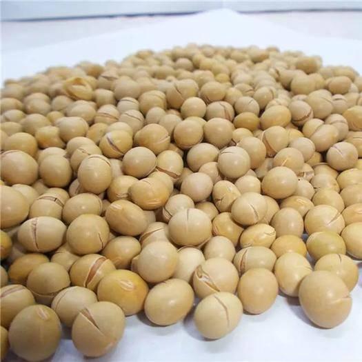 郑州黄大豆 批发黄豆5斤现磨低温黄豆打豆浆专用料包烘焙豆子即食商用豆浆