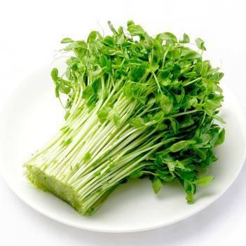新鲜蔬菜豌豆苗碗豆尖豌豆芽苗菜