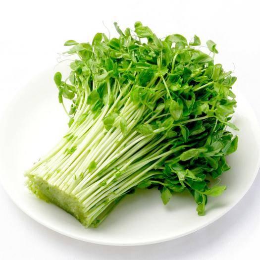 安康 新鲜蔬菜豌豆苗碗豆尖豌豆芽苗菜