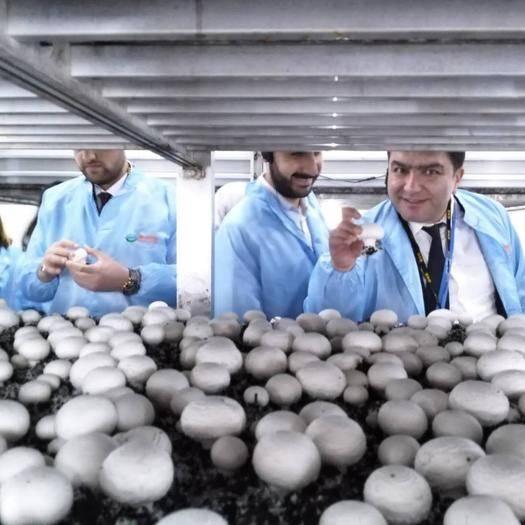 开封兰考县双孢菇 双饱白菇(4-7cm)货量充足、全年供应、量大从优、欢迎合作
