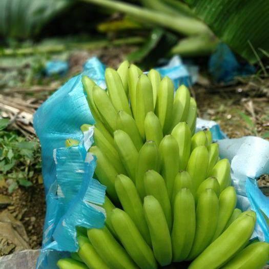 屏边苗族自治县 自家种的香蕉9号,味道香甜,能长期大量供货