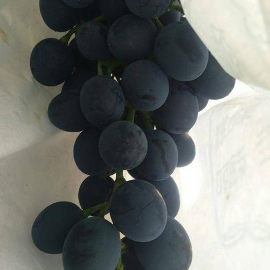 宾川县 这猫耳朵黑提葡萄是甜甜的那种哟