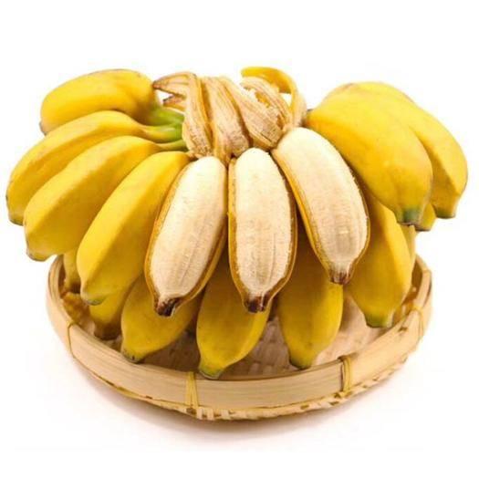 南宁 广西小米蕉香蕉新鲜水果酸甜软糯非皇帝蕉芭蕉粉蕉苹果蕉