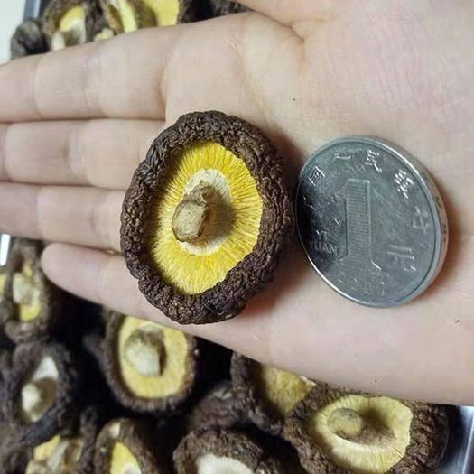 鞍山岫巖滿族自治縣 東北金錢菇250克/袋 剪柄小香菇 香嫩潤滑 一件代發包郵