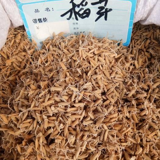 保定安國市 稻芽 干品無硫無添加消食和中健脾開胃一公斤起包郵