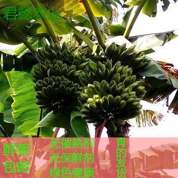 君懿农新鲜水果大芭蕉 大牛蕉 新鲜香蕉皇帝蕉西贡蕉