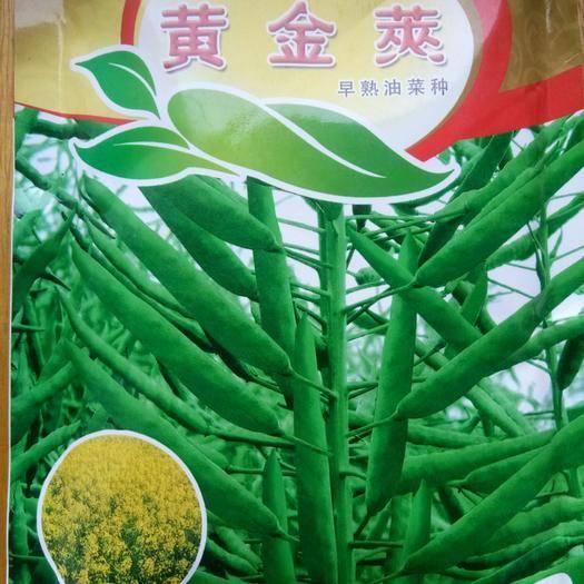郑州金水区紫油菜种子 早熟油菜种子