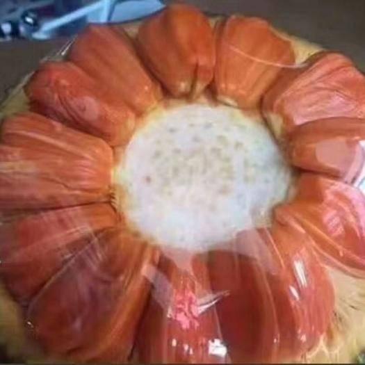 钦州灵山县红肉菠萝蜜苗 四季泰国红肉菠萝蜜8号正品嫁接苗