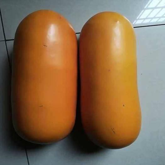 邵阳邵东县香如蜜种子 黄金香蜜甜瓜 南美香如蜜火腿甜瓜种子 水果蔬菜 种籽汁如蜜糖