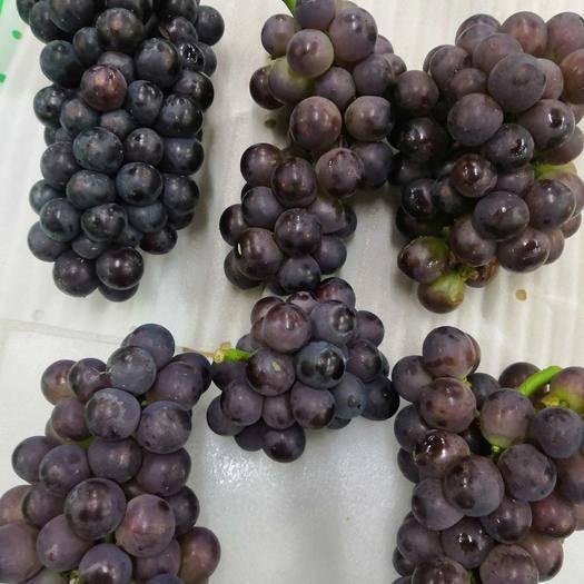 勉县 无籽黑葡萄