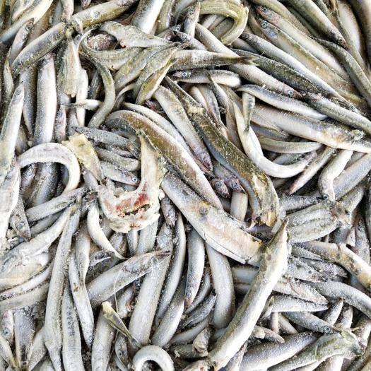 威海荣成市 饲料沙钻鱼,饵料鱼,冰块鱼 饲料 小杂鱼 海鱼