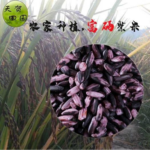賀州八步區 賀州農家富硒紫米粽子米老品種粗糧1000g包郵(一件代發)