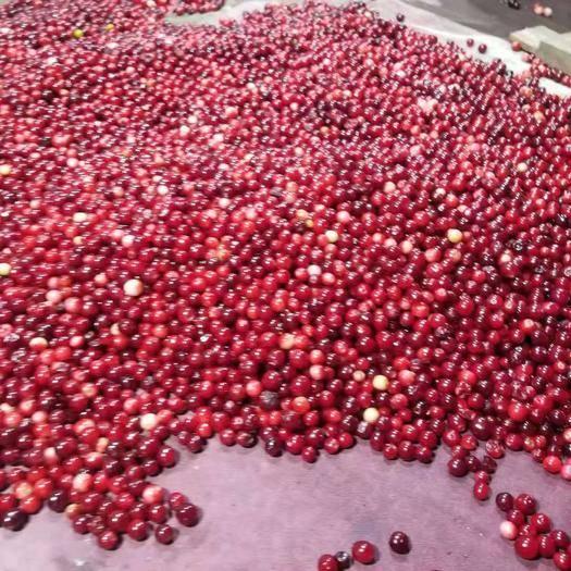 大兴安岭蛇莓 大兴安岭北国蓝莓科技开发有限公司 大量供应速速冻红豆新鲜红豆