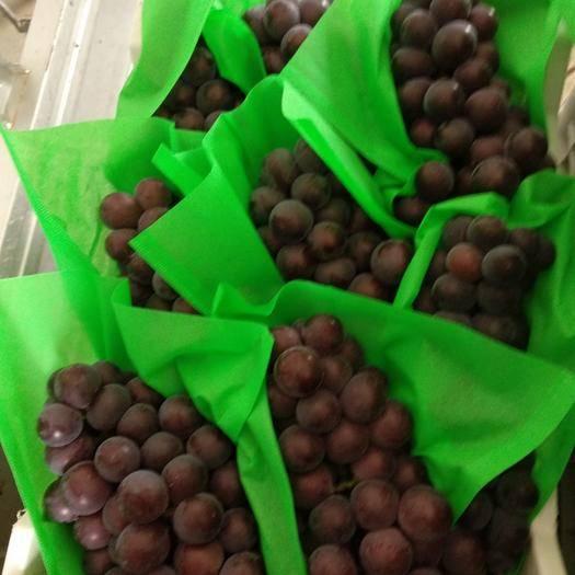 深泽县 急售3元/斤 紫藤葡萄 上百亩地 1次果