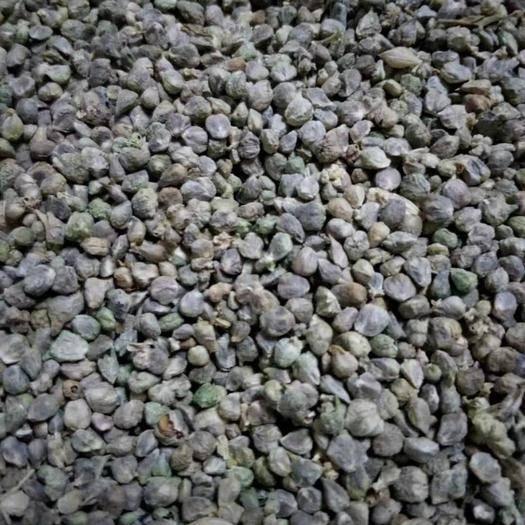 张掖民乐县 圆叶菠菜种子,一代杂交种,纯度高,芽率高,欢迎朋友们选购