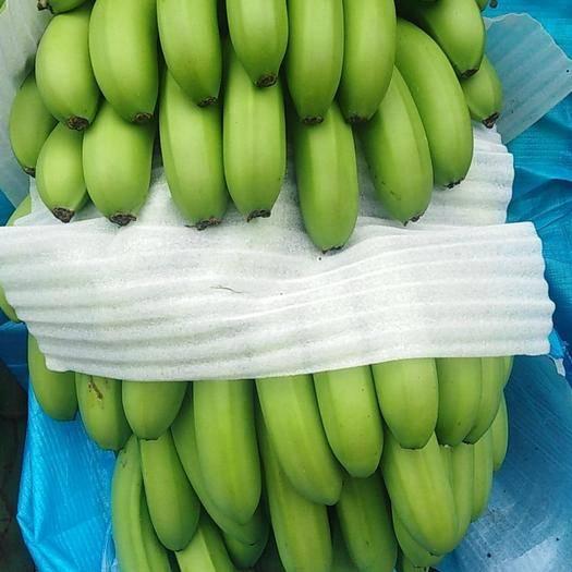 红河屏边苗族自治县 大量供应云南山地蕉威廉斯香蕉