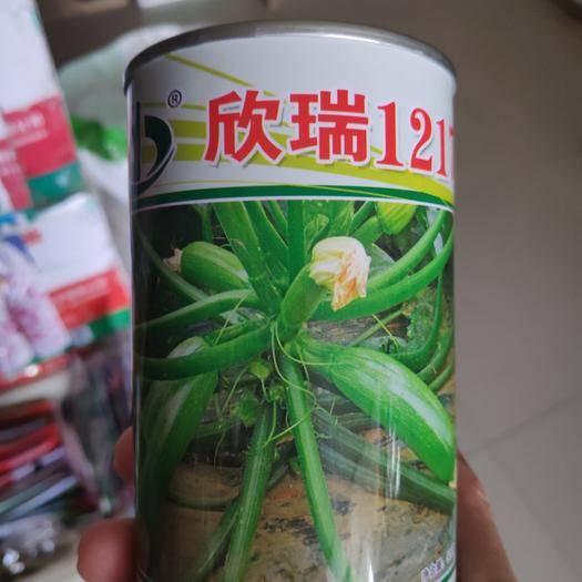沭阳县欣瑞1217西葫芦种子 引进抗病毒西葫芦品种早熟适合春秋露地及冷凉地越夏栽培