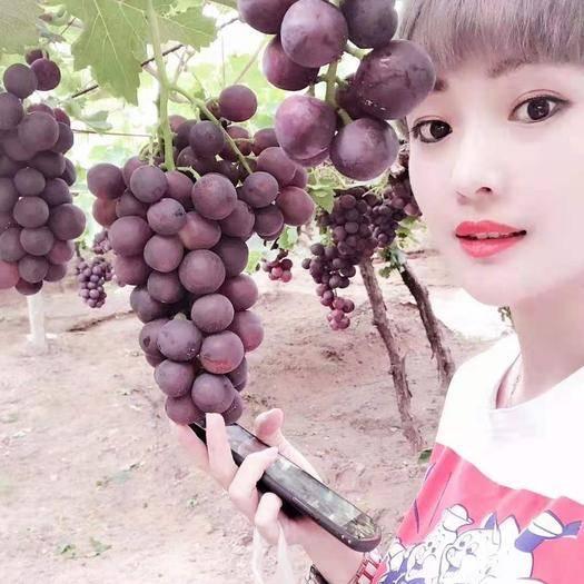 涿鹿县 葡萄熟了