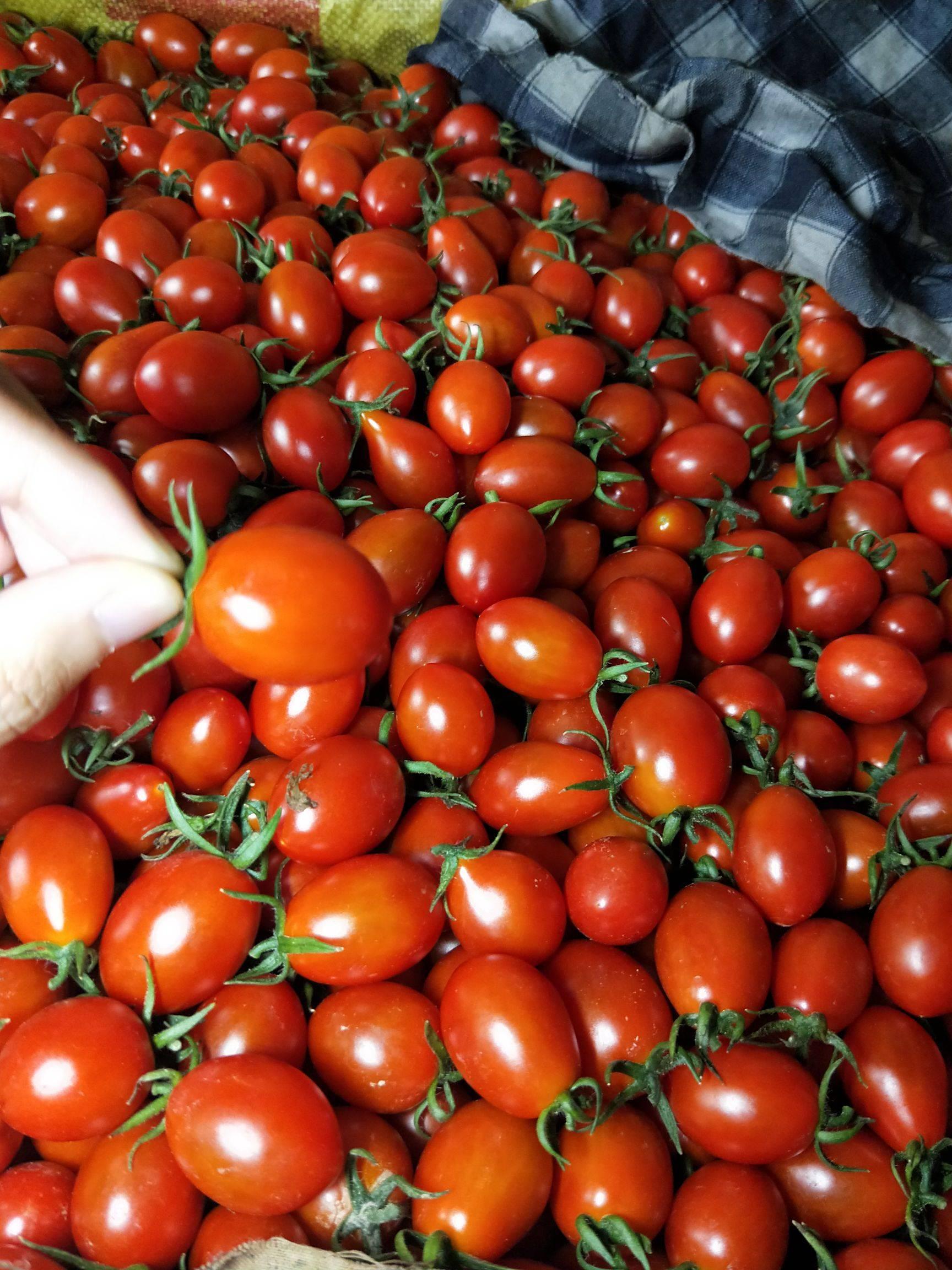 此圣女果品名斧山88,為青島農業科研基地研發新品種,酸甜可