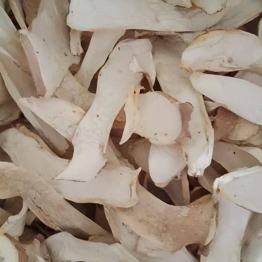 河南省濮阳市范县鲜杏鲍菇 干杏鲍菇 一级 6cm以上