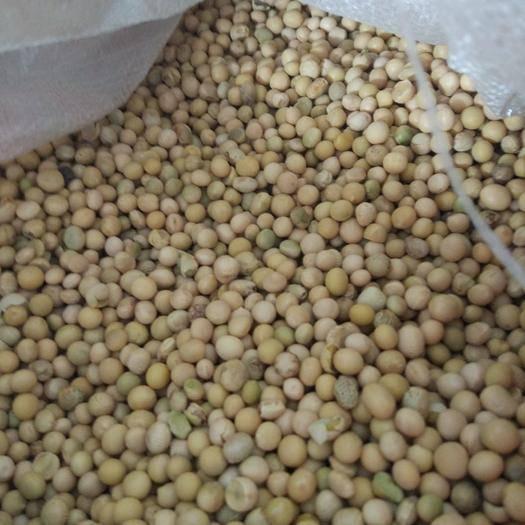嫩江县 小粒,碎豆