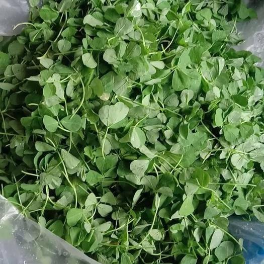 江苏省南通市海门市野生金花菜 质量保证。绿色安全。