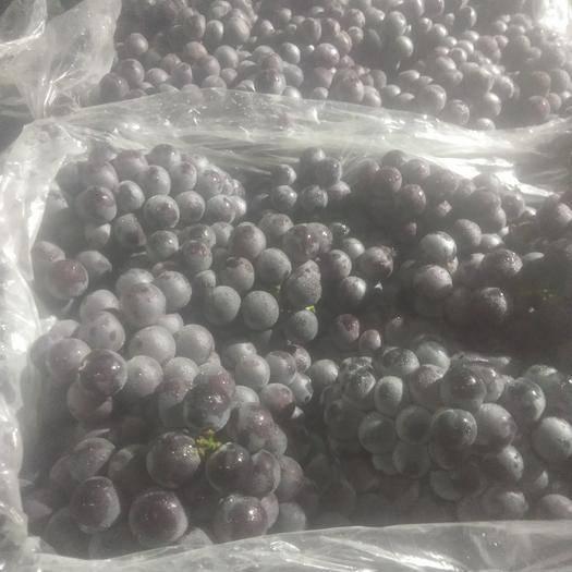 苏州 精品葡萄质量好价格美丽
