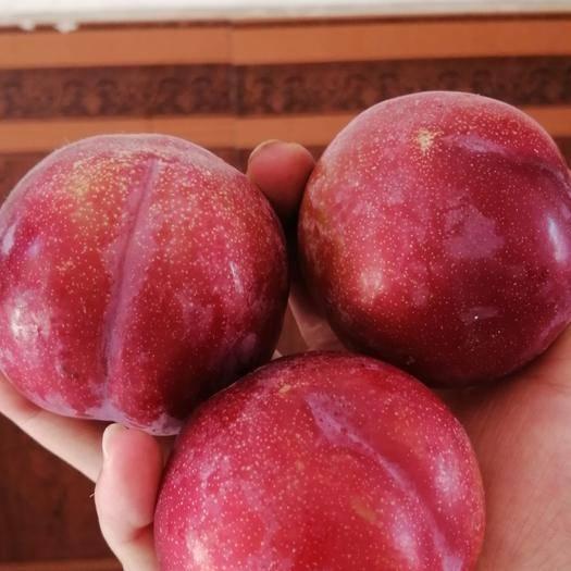 西安周至县红布林 30一件,每件9斤