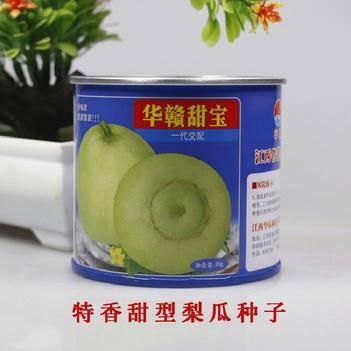 华赣日本甜宝甜瓜种子特大正品香瓜种早熟四季高糖17原装20克