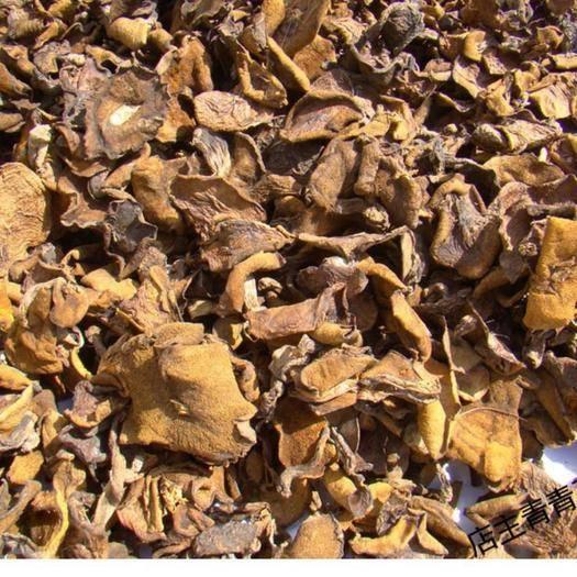 内蒙古自治区赤峰市敖汉旗松树菌 天然野生松树菇,干香红蘑