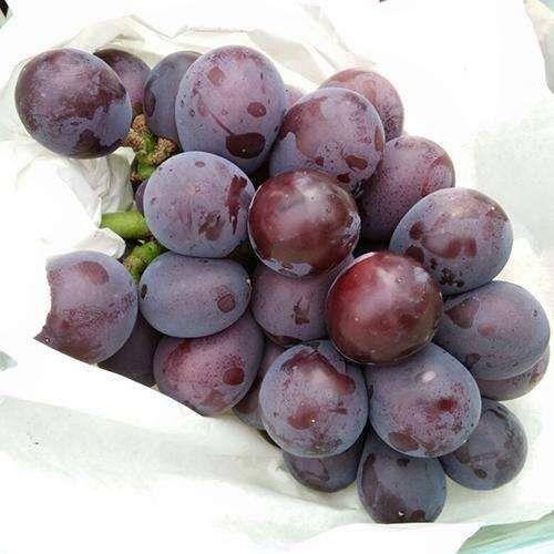 石家庄 葡萄熟了!