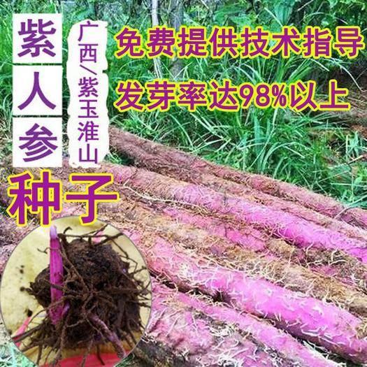 湘潭湘乡市 紫玉淮山种子种苗培育紫色山药种子广西正宗紫玉淮山药种