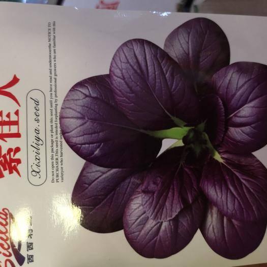 商丘夏邑县 紫油菜种子  特色菜