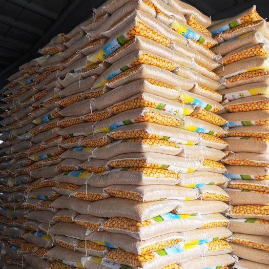 大连沙河口区黑脐王 黄豆品种是黑河43。蛋白在42左右,