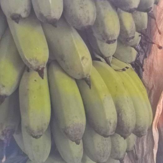 漳平市米蕉 九成熟