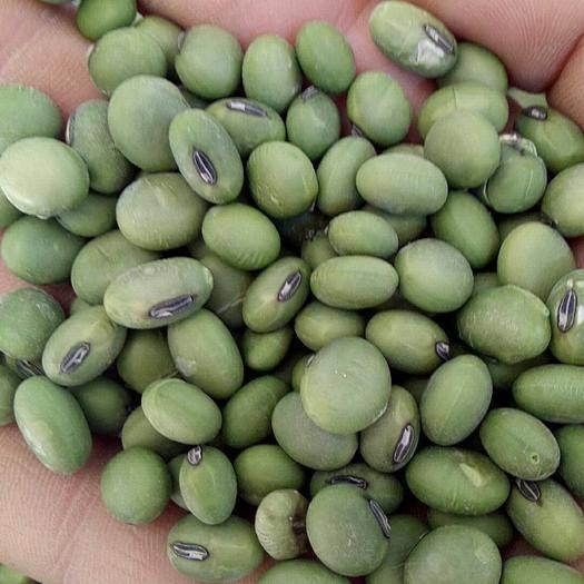 盐城大丰区 优质双青豆,双比重,色选,质量保证