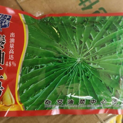 商丘夏邑县紫油菜种子 秦油二号油菜种子 200克 晚熟 高产