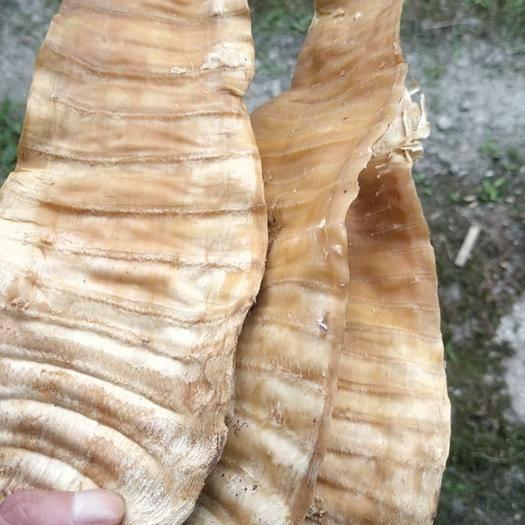 撫州宜黃縣 干筍產地直供品質保證