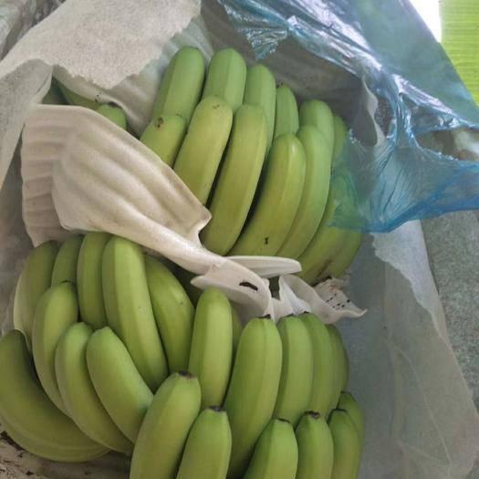 南宁西乡塘区威廉斯香蕉 物美价廉